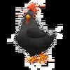 Black Leghorn Chicken