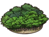 Greenforesticon