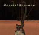 Coastal Opo-opo