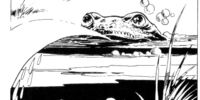 Spit Toad