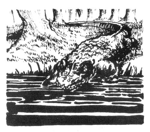File:Crocodile.jpg