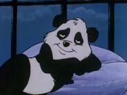 Peewee the cute baby Panda