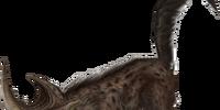 Alpha Hyena