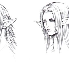 Facial sketches for the Elvaan.