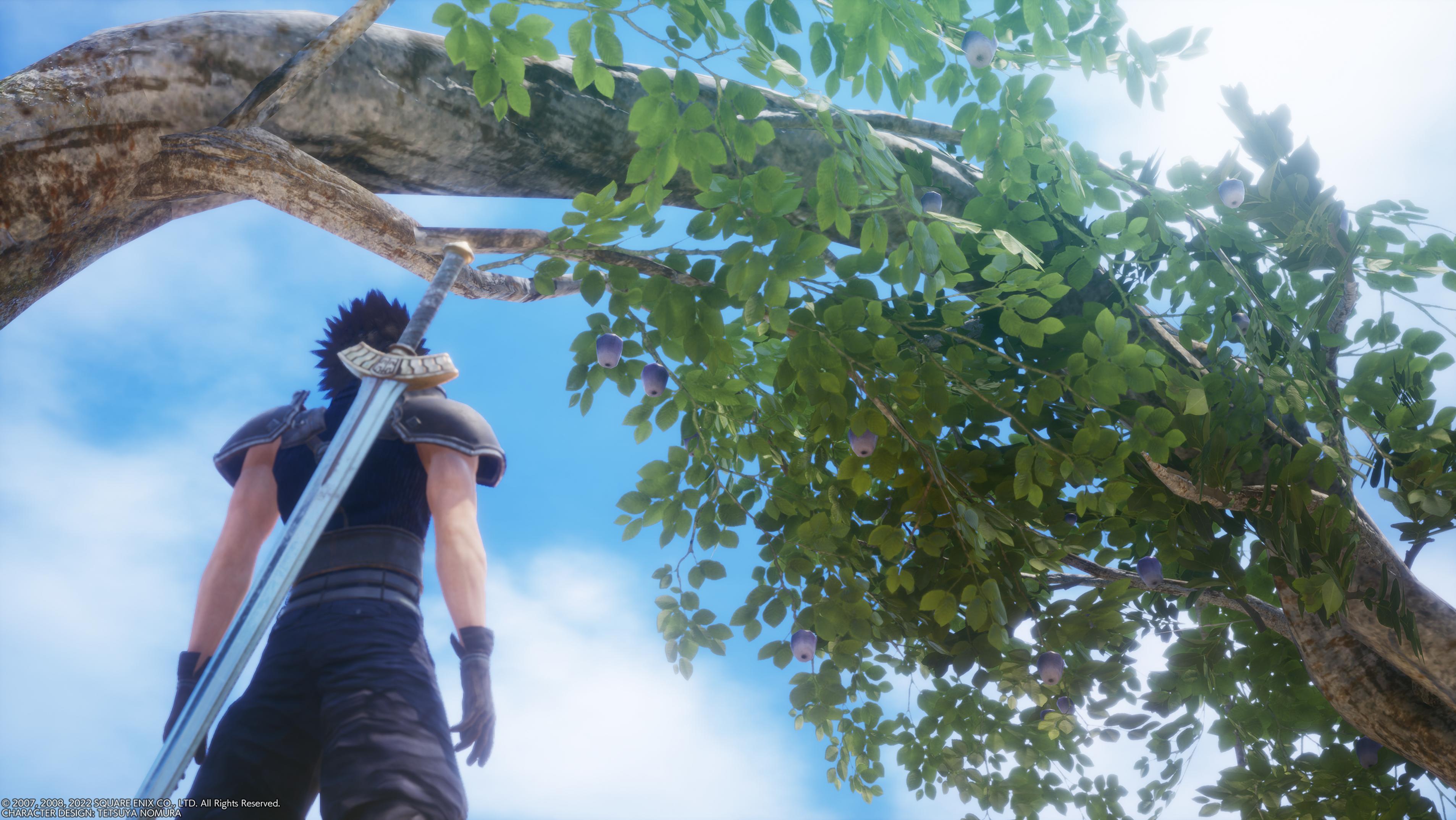 File:Banora white tree.png