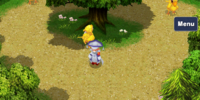 Chocobo Woods