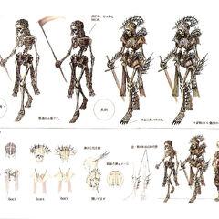 Skeleton genus.
