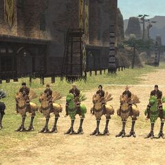 Chocobos line up at the starting line.