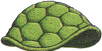 Turtle Shell
