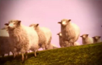 Bravely Default Sheep