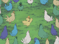 Episode 11 Chocobos