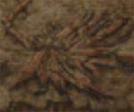 Phoenix-ffix-engraving