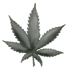File:White widow.png