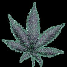 Cannabis electro