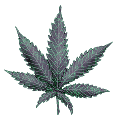 File:Cannabis electro.png