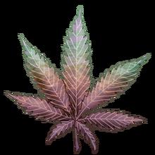 Cannabis sunny day