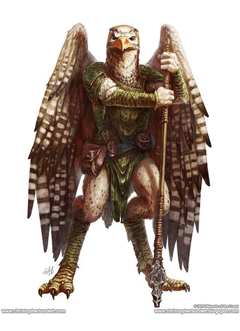 File:Monster Manual 5e - Aarakocra - Christopher burdett - p12.jpg