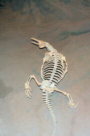 Champsosaur