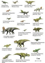 CeratopsiaI BW