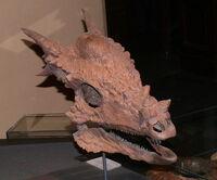 Stygimoloch spinifer