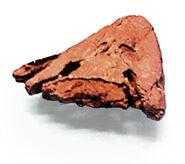 Tiktaalik skull rear