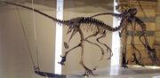 Dromaeosaurus group NHM2