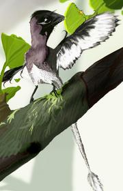 Epidendrosauruswiki1