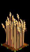 Wheat fruit