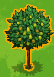 Auragold tree