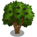 Elderberry Tree-icon