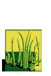 Grass4-icon