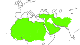 Holy Islamic Caliphate
