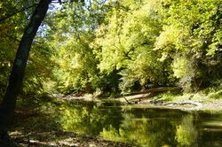 Tiffin River at Goll Woods State Nature Preserve in Ohio