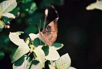 Bhadra butterflies1 dk