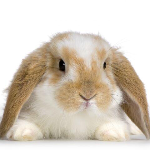 File:Bunny -1.jpg