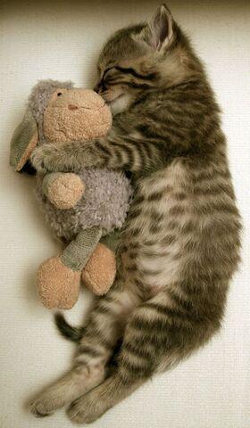 File:Hugging-kitten.jpg