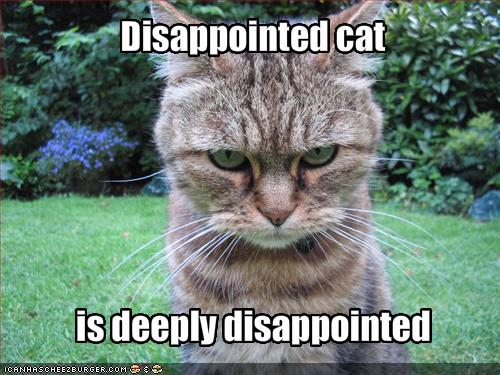File:Catfulljjjs.jpg