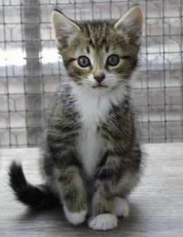 File:Kitten 000.jpg
