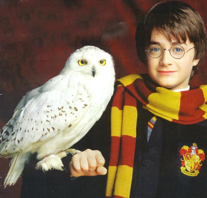 Image - Hedwig harry potter.jpg   Glee TV Show Wiki ...