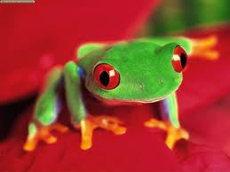 File:Cute tree frog.jpg