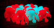 Craybothglowganglight