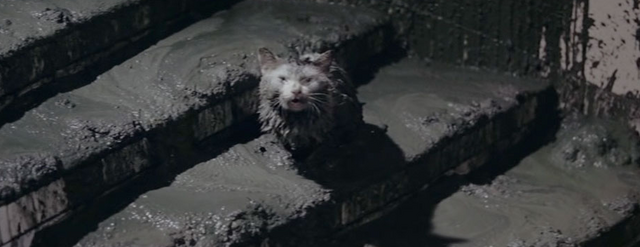 File:Godzilla vs. Hedorah - Add a Cat for Dramatic effect.png