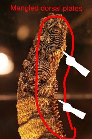 File:Tail inspection 2.jpeg