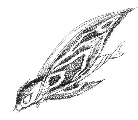 File:Concept Art - Rebirth of Mothra 2 - Aqua Mothra 12.png