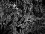 Skink King-Kong-1933