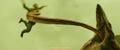 Kong Skull Island - Reign TV Spot - 15