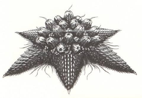 File:Concept Art - Rebirth of Mothra 2 - Barem 1.png