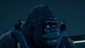 Kong and Chimps