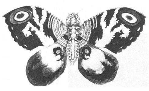 File:Concept Art - Godzilla vs. Mothra - Mothra Imago 2.png