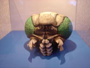 File:Meganula Head in 2004.jpg